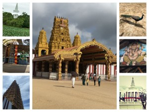 jaffna-collage